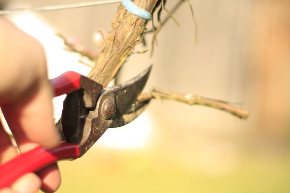 Cada planta, seto o árbol requiere herramientas específicas para su poda.