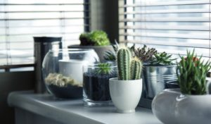 cómo cuidar plantas de interior