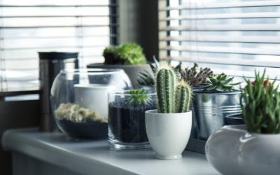 Cómo cuidar tus plantas de interior